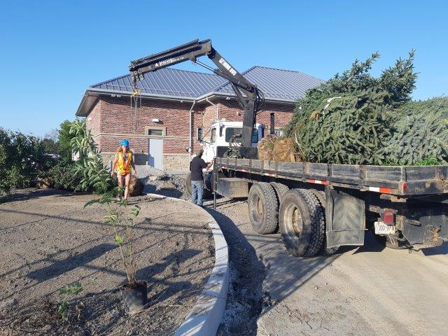 Commercial Tree planting